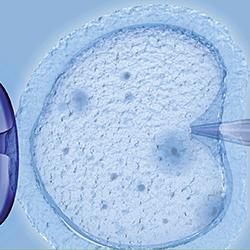 reproduktionsmed